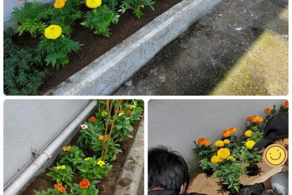 素敵な花壇になりました!